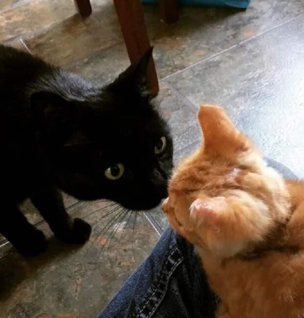 «Не уходи!» — будто кричал котёнок, цепляясь лапками за ногу посетителя. Малыш находился в больнице, пережив пожар
